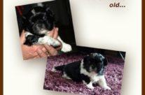 Puppy 3 weeks old