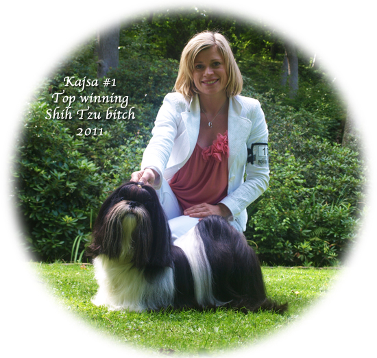 Kajsa #1 Top winning Shih Tzu bitch
