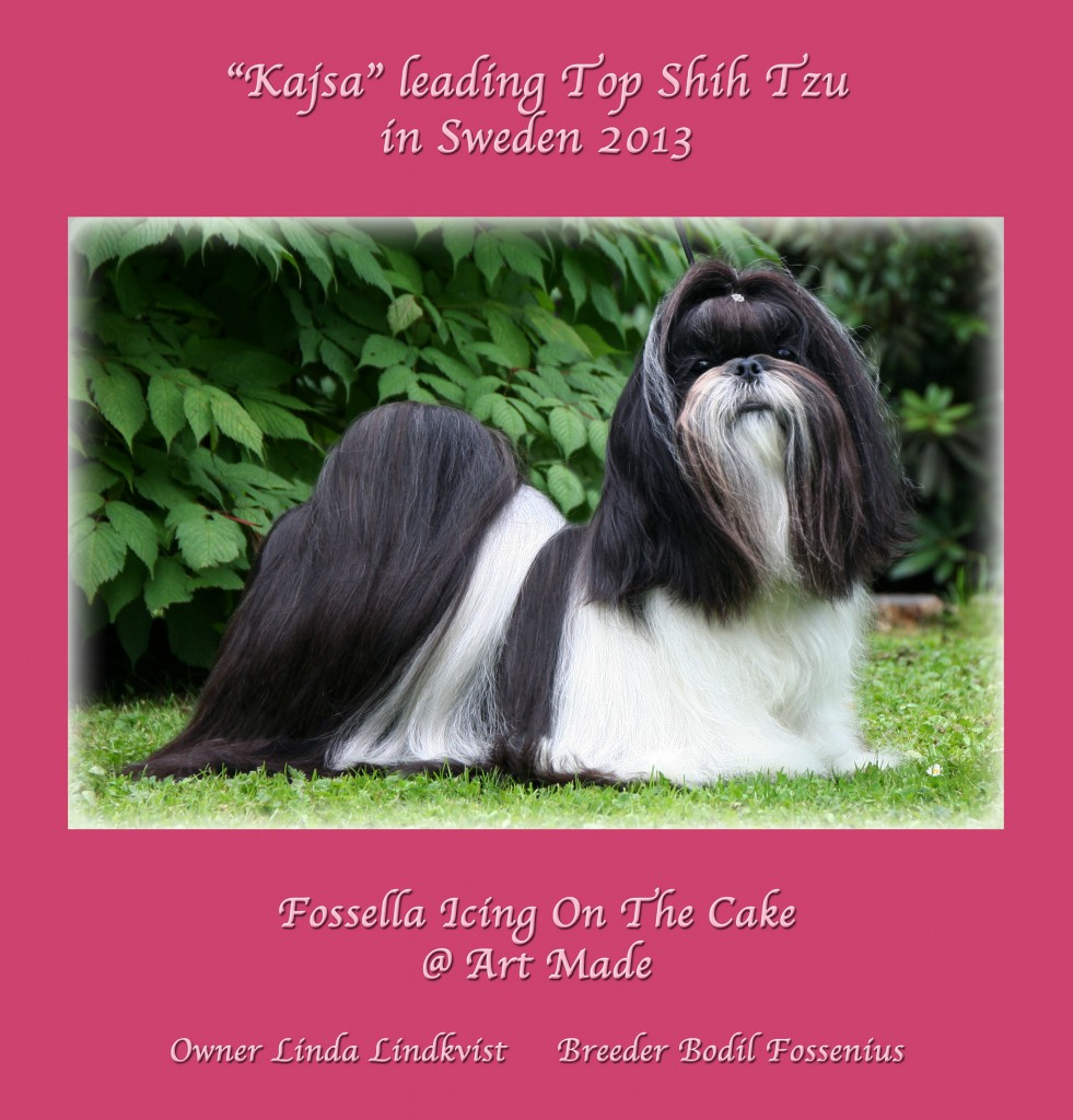 Kajsa leading top Shih Tzu3