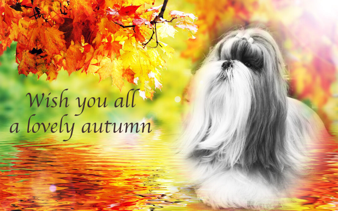Autumn greetings!