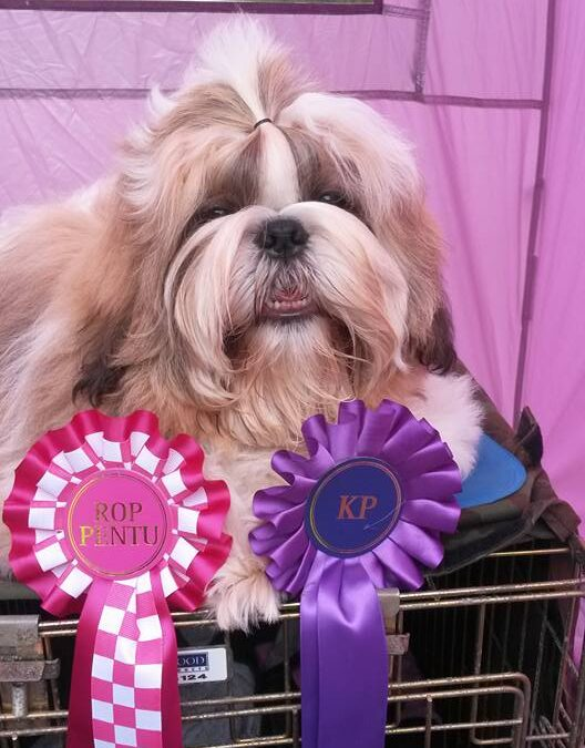 Pauli BOB puppy and shortlisted in the group finals!