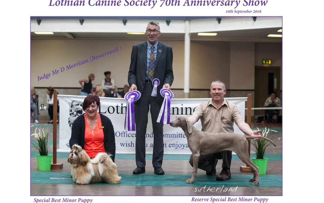 Ziggy wins Best In Show Minor Puppy