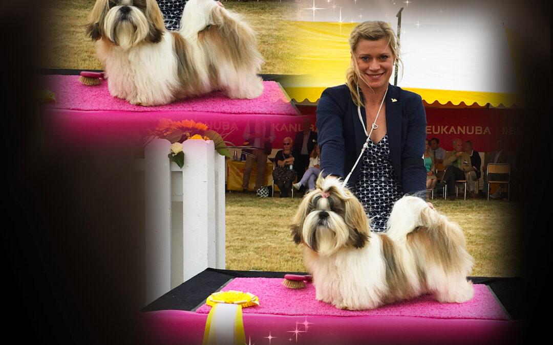 Marilyn wins BIS-3 puppy &  Ziggy BIS-1 minor puppy!