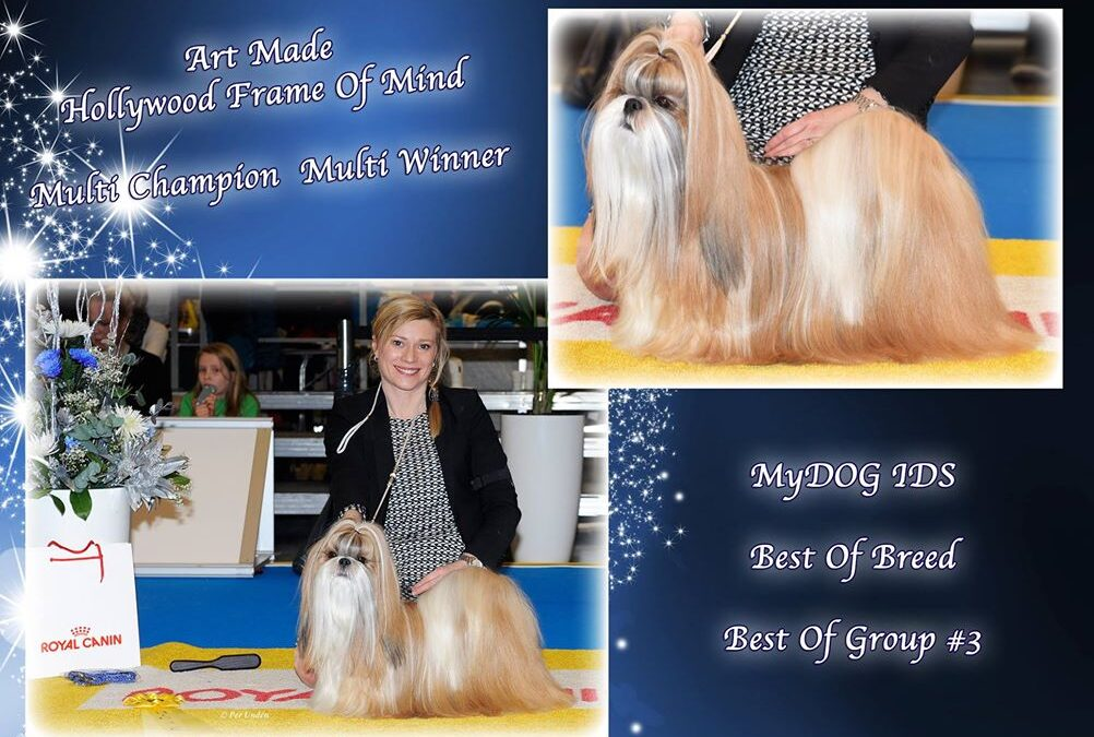 Norma BOB, Crufts qualified & Group 3 @MyDOG 2017!