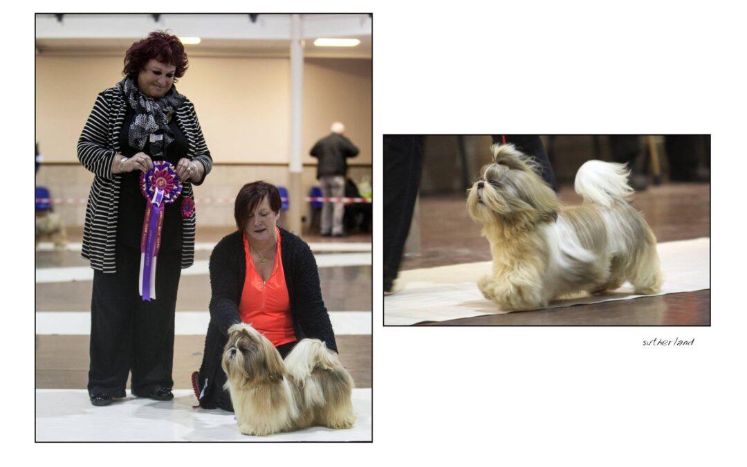 Ziggy Best Puppy In Show!