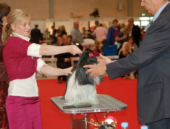 World Dog Show 2010
