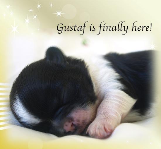 Gustaf!